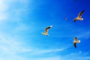 Seagulls On Sky Wide