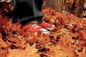 Shoes On The Leaves