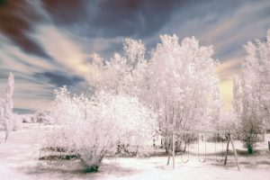 So Beautiful Nature In Negative