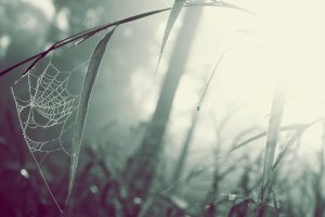 Spider Web In Nature Wide