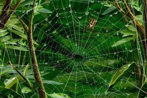 Spider Web Wide
