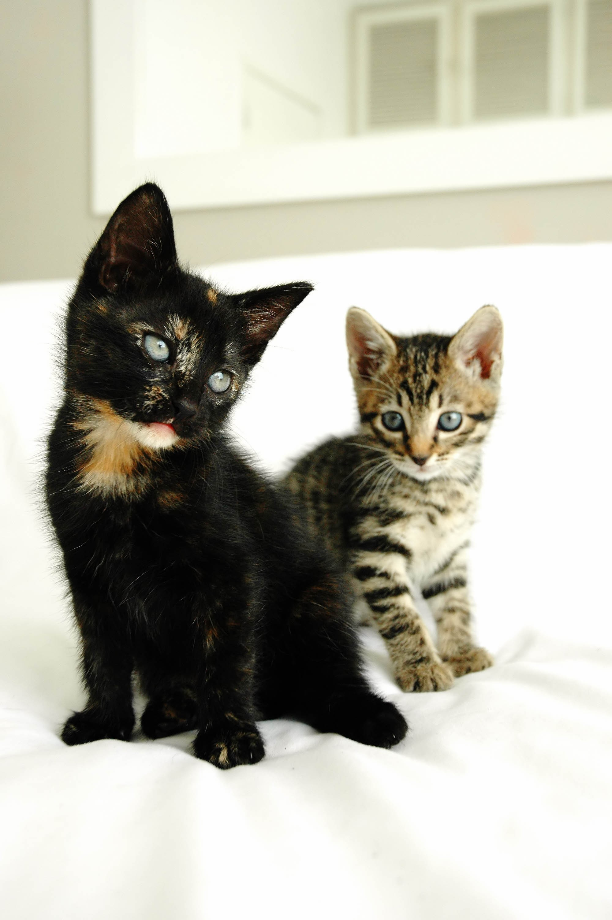 Sweet Kittys Other