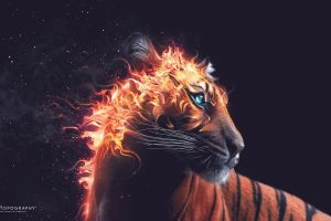 Tiger Fire Wide