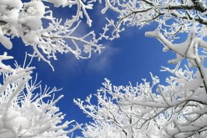 Trees From Below To Sky In Winter