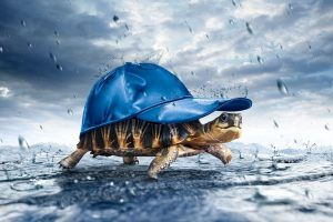 Turtle With Cap In The Rain Wide