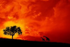 Two Giraffes Red Sky