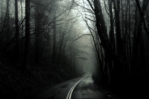 Unknown Road Through The Woods Wide