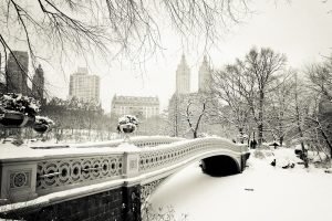 Usa New Yorks Central Park At Winter Wide