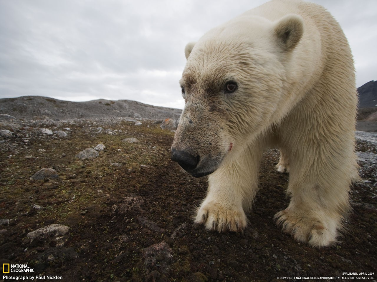 White Bear National Geographic