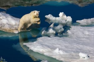 White Bear On Ice – National Geographic