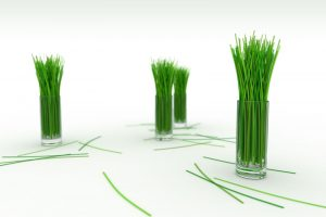 White Green Grass In Glass