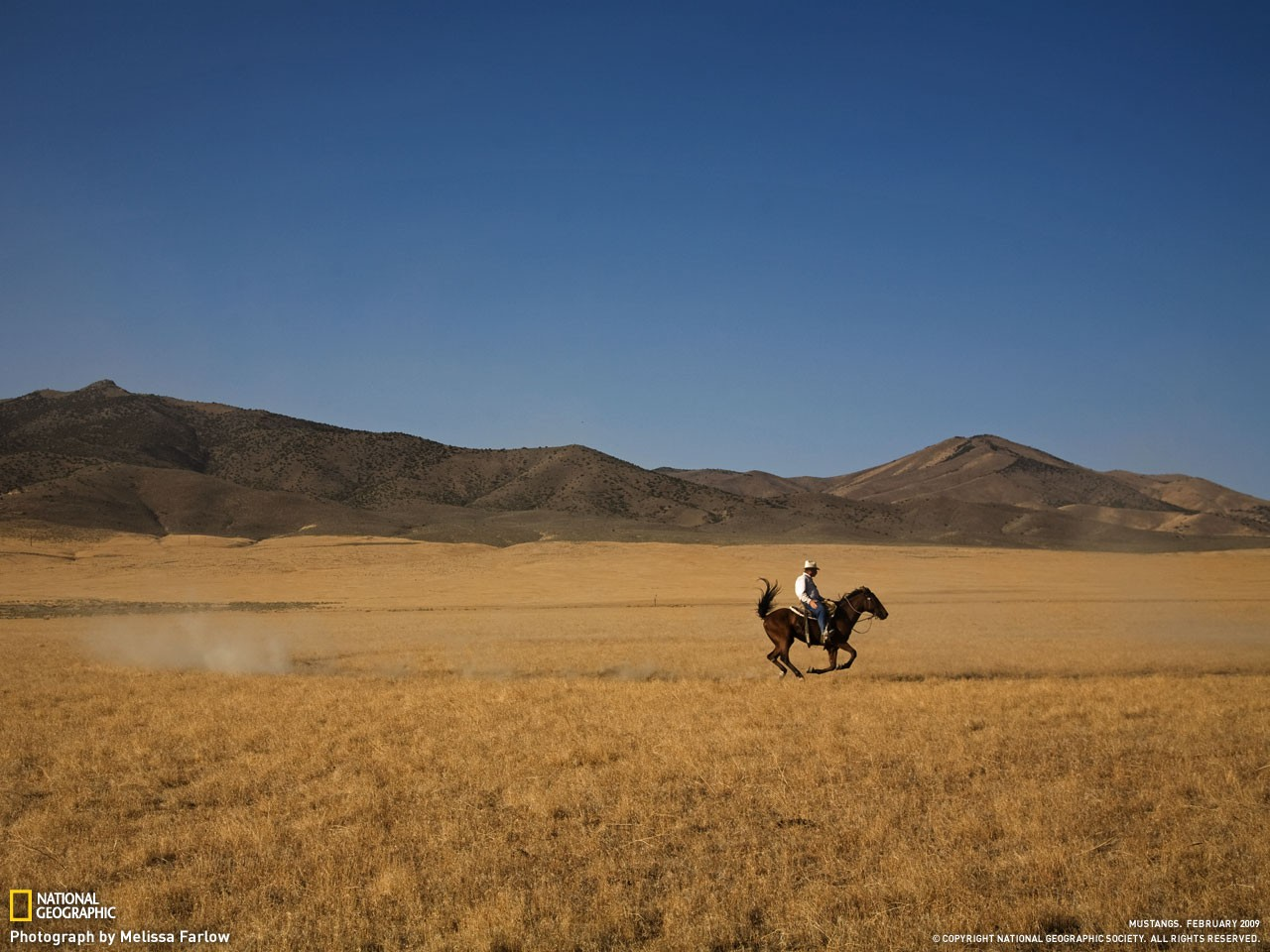 Wild Ride With Horse In Field Great Landscape