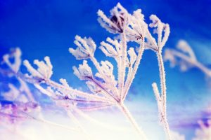 Winter Fantasy Flower