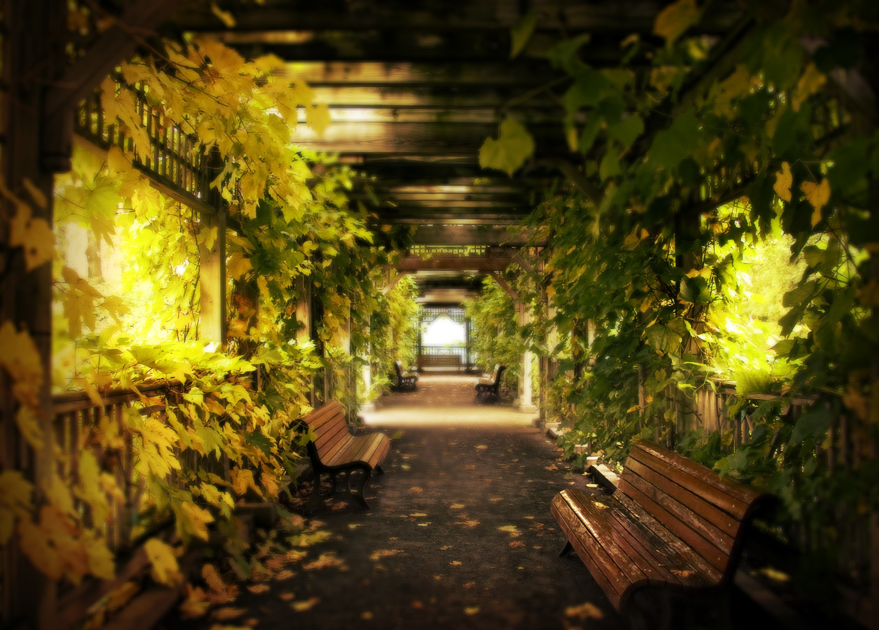 Wonderful Hall With Leafs Other